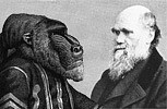 darwin and baboon